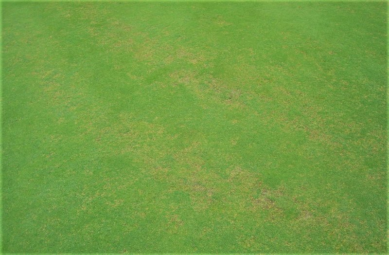 anthracnose-turf-disease-ags-nutrition-health-fertiliser