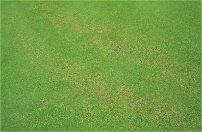 anthracnose-turf-disease-ags-nutrition-health-fertiliser