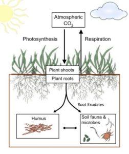 AGS fertiliser nematodes turf